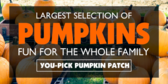 Pickem Pumpkin Patch
