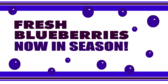 Fresh Blueberries Now in Season