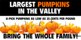 Pumpkin Patch Valley