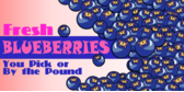 Fresh Fruit Blueberries Pick Pound