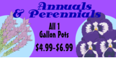 Home Improvement Annual Perennial