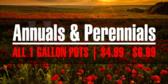 Annual Perennial Sale