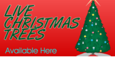 Live Christmas Trees