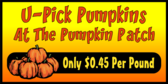 5 Pumpkins Stacked Sign