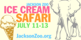 Zoo Ice Cream Safari
