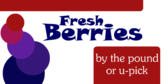 Fresh Berries U Pick