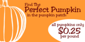 Pumpkin Patch #10