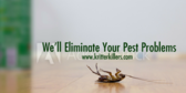 Eliminate Pests
