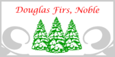Douglas Firs Noble