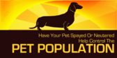 Spay or Neuter to Control the Pet Population