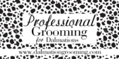 Professional Dog Grooming Dalmation