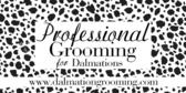 Professional Dog Grooming Dalmation