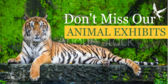 Don't Miss Our Animal Exhibits