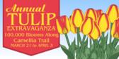 Annual Tulip Extravaganza