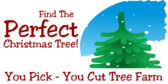 Find the Perfect Christmas Tree