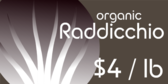 Organic Raddicchio