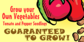 Grow Your Own Veggies