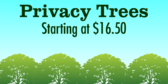 Privacy Trees For Sale