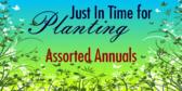 annual perennial signs