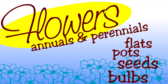 Annuals and Periennials
