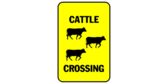 Cattle Crossing Multiple Cows