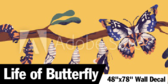 "48"" X 78"" Life of A Butterfly"