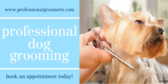 Professional Grooming Dog