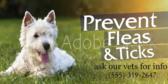 Prevent Fleas and Ticks