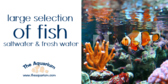 Freshwater and Saltwater Fish