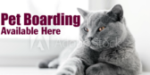 Pet Boarding Available Here