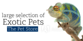 Large Selection Of Exotic Pets more