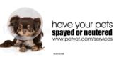 Have Your Pets Spayed Or Neutered