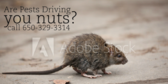 Are Pests Driving You Nuts