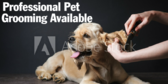 Professional Pet Grooming Available Here