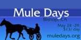 Annual Mule Days