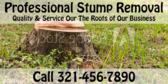 Professional Stum Removal
