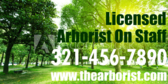 On Staff Licensed Arborist