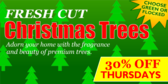 Fresh Cut Christmas Trees Tree Sale