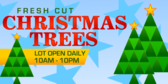 Fresh Cut Christmas Trees Lot Open Daily