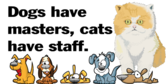 Funny Cat Banner