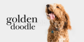Pet Dog label