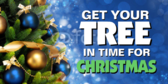 Tree For Christmas Banner