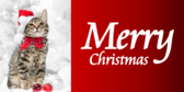Merry Christmas Cat With Santa Hat Banner