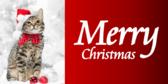 Christmas Cat Label