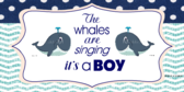 It's a Boy Whale Themed Banner