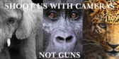 Protecting Animal Rights Sign
