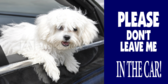 Don't Leave Dog In Car Kennel