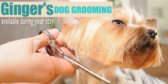 Dog Groomer Available
