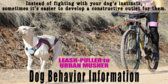 Dog Behavior Information