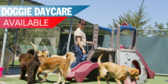 Kennel Doggie Daycare